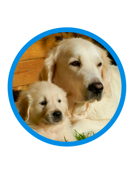 SPAM - Gossos