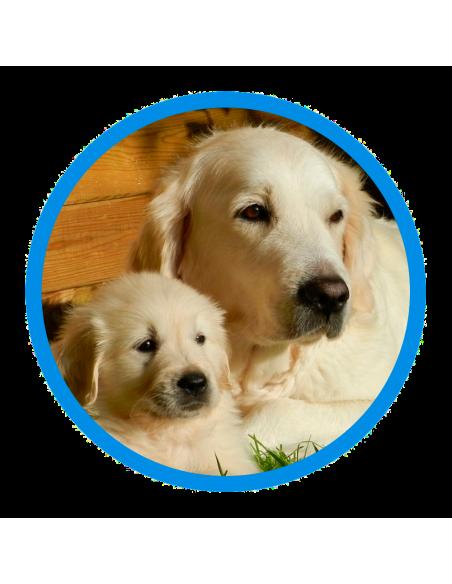 Protectora de Granollers - Perros