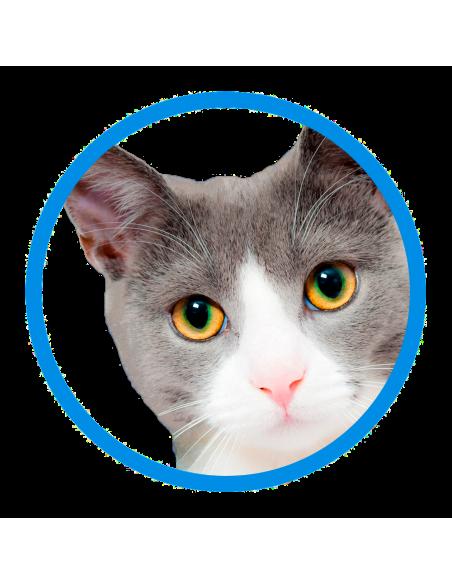 Protectora de Granollers - Gats